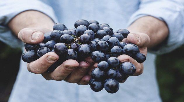 Tracciabilità alimentare: al via la nuova sperimentazione